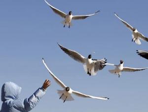 春到塞上 鸥鸟翔集