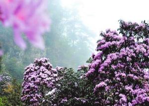 看!广西的花开了