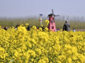 山东济南:踏春赏花 亲近自然
