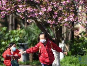 中国科大校园樱花绽放