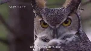 公益广告《野生动物保护篇》