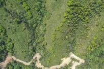 天天娱乐,天天娱乐大厅:凌云:茶产业助农脱贫增收