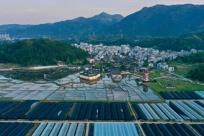 福建周宁:花卉产业助力脱贫