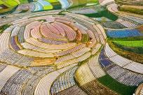 高清图集:南宁新生村农民绘制春色田园壮锦图