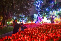 青秀山东区恢复开放 百组彩灯为邕城增添靓丽夜景