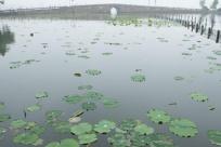 杭州西湖:客流平稳 秩序井然