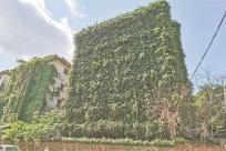 """5月18日焦点图:钦州""""绿房子""""成网红景点"""