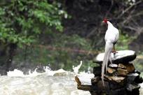 小山村里的观鸟分红