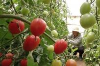 河北唐山:特色种养殖助农增收