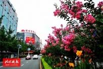莫道花无百日红!满城紫薇盛开,惊艳了桂林街道