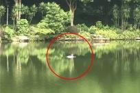 7月2日焦点图:手机pt电子技巧石门森林公园发现一具男尸