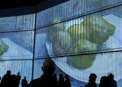 梵高沉浸式畫展亮相惠靈頓