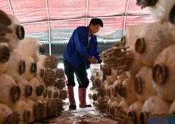 從貧困戶到蘑菇種植能手