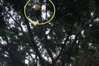 担心被处罚 柳州外卖小哥突然爬上大树 死活不下来