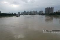 高清:邕江全线涨水将超设防水位 不少市民冒险游泳