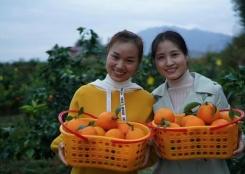 秋日橙飘香