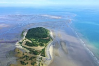 12月10日焦点图:防城港山心沙岛成鸟的天堂