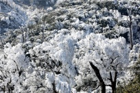 廣西三江:霧凇美景如畫