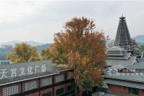 廣西三江:楓林披彩美如畫