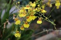 高清組圖:邕城冬日 蘭花飄香