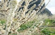 高清圖集:美美美!廣西這個地方的桃花李花開了