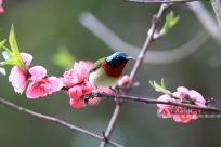 高清圖集:飛鳥迎春,桂北大地處處春意盎然