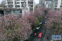 �V西柳州:紫�G花�_�M城春