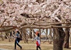 春到颐和园