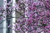 寻找柳州这季花海深藏的秘境