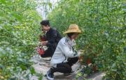 春季生态农业园迎丰收
