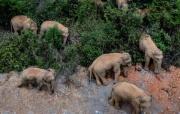 它们的家园还好吗?——探访云南亚洲象栖息地