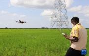 中國技術助力烏干達農業現代化進程