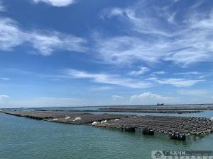 【钦州正当红】大蚝红树林白海豚大工业共存 构生态和谐新画面