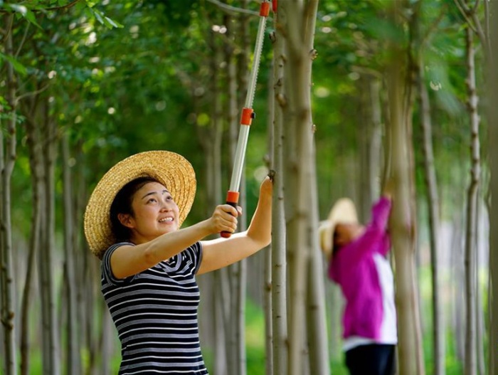 河北滦县:苗圃促增收