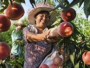陕西:产业带动脱贫增收