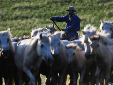皎皎白马奔驰草原
