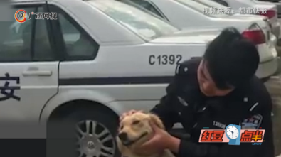 金毛迷路在派出所临时安家  客串警犬抓了个贼!