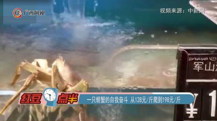 一只螃蟹的自我奋斗 从128元斤爬到198元斤
