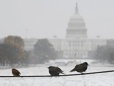 华盛顿迎来今年首场降雪