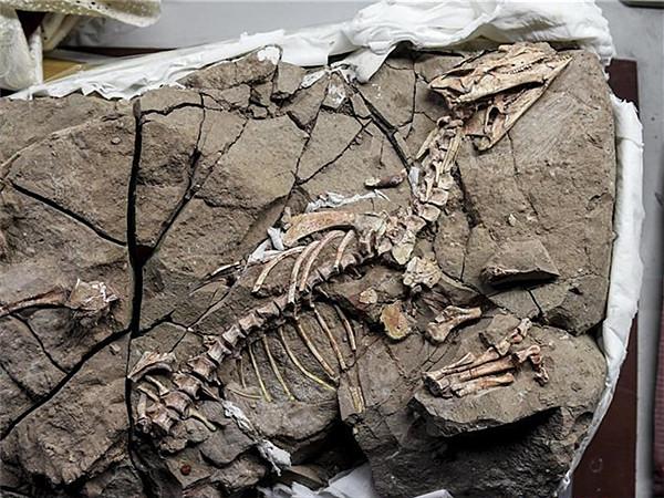 恐龙牙釉质波纹构造最早记录