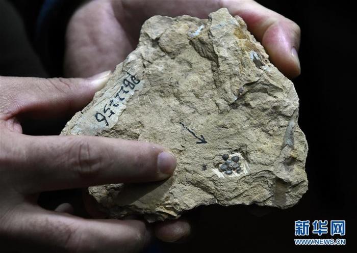 """这朵""""南京花""""开了1.74亿年"""