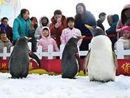 与企鹅一起迎新年