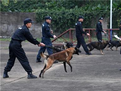 警犬演练备战春运