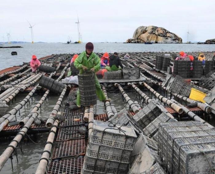 南日岛:海水养殖富渔家