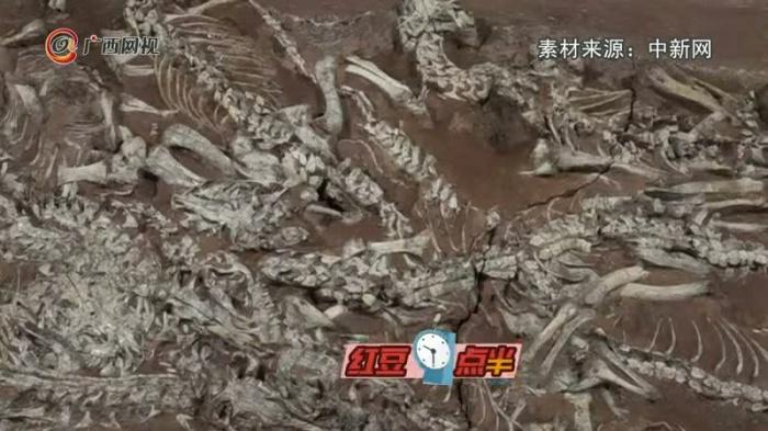 这个2.3亿年前的古生物太酷了!专家用3年时间修复完成