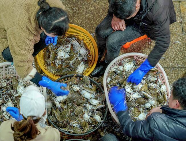 舟山:绿色渔业产销两旺
