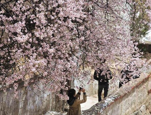 拉萨: 山寺桃花始盛开