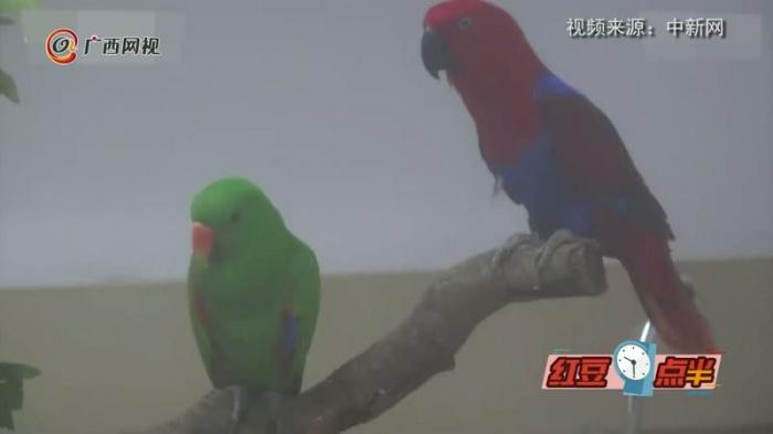 超萌��世界地球日看澳洲鹦鹉进化历程
