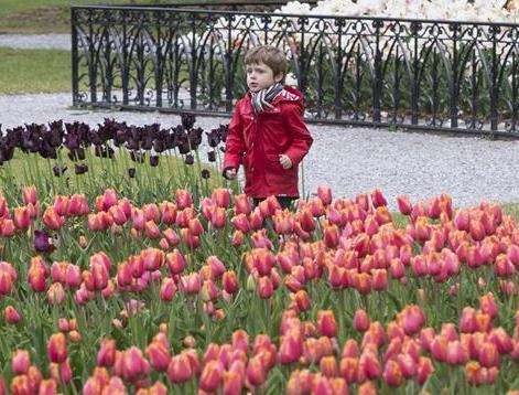 瑞士莫尔日举办郁金香节