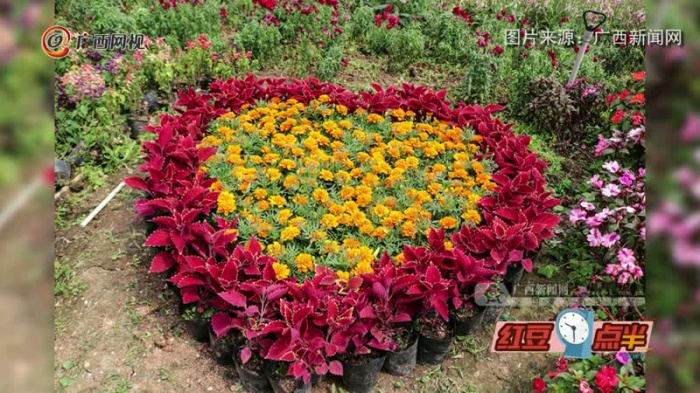 南宁有个不为人知的赏花好去处 可免费参观